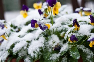 Winterize Your Plants