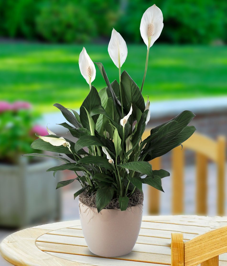 10 Easiest House Plants to Care For