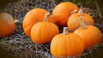 How to Make Your Pumpkins Last Longer