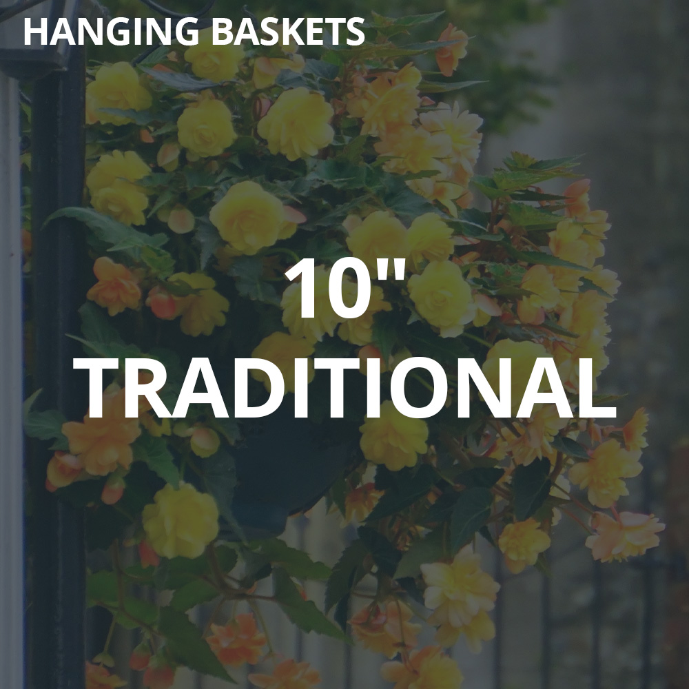"""10"""" Traditional Hanging Baskets"""