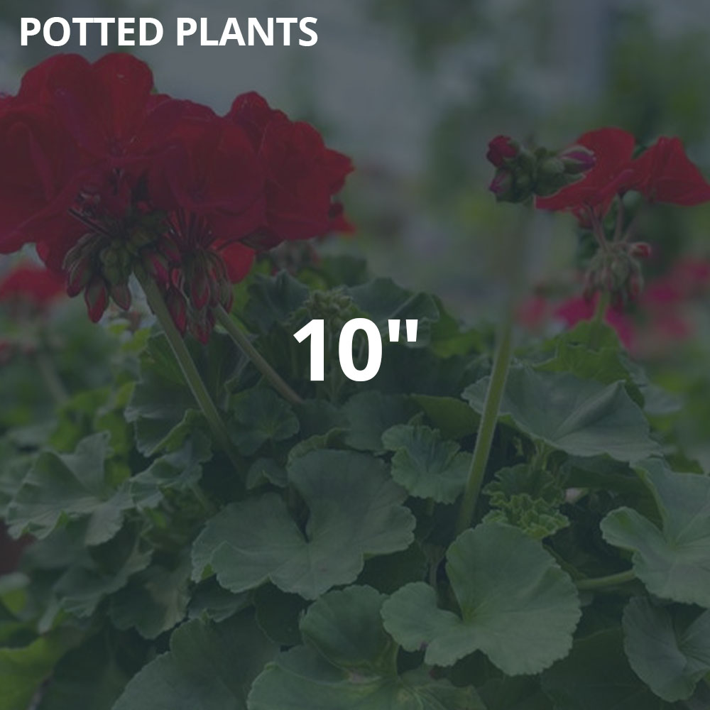 """10"""" Potted Plants"""