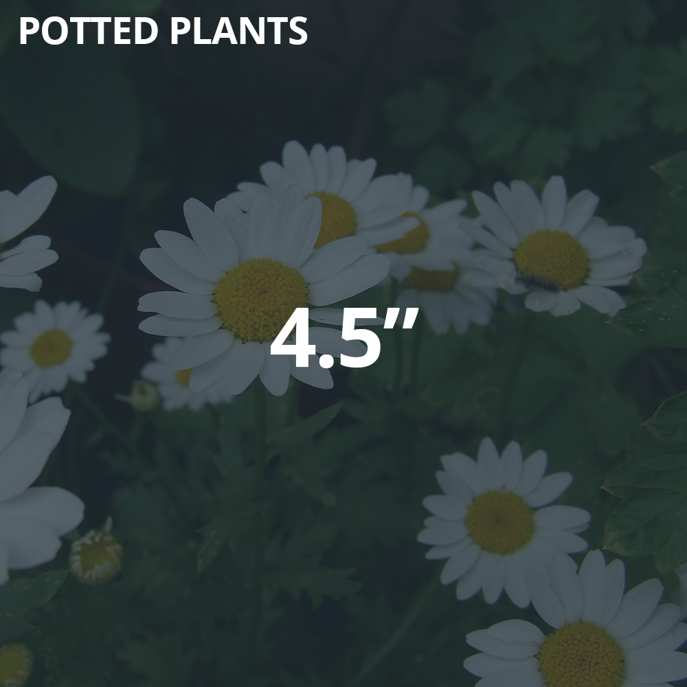 """4.5"""" Potted Plants"""