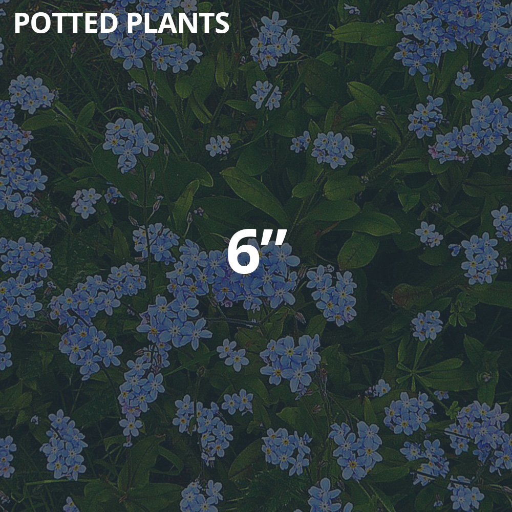 """6"""" Potted Plants"""