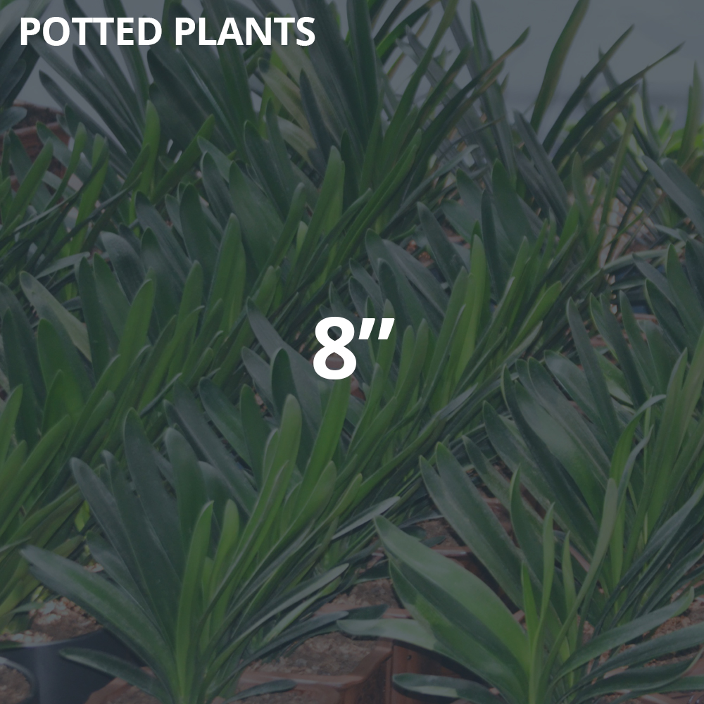 """8"""" Potted Plants"""