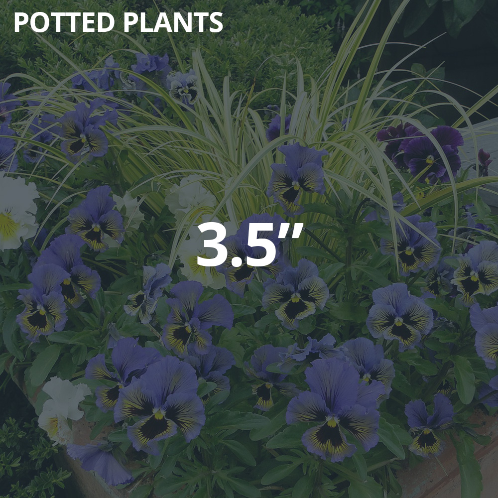 """3.5"""" Potted Plants"""