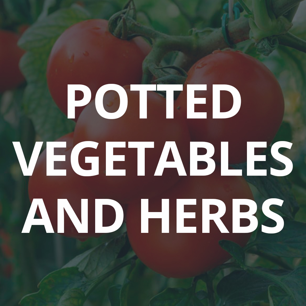 Potted Vegetables And Herbs