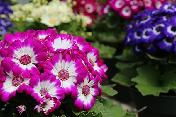 greenhouses spring flowers