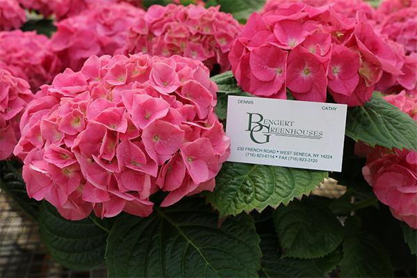 greenhouses flowers