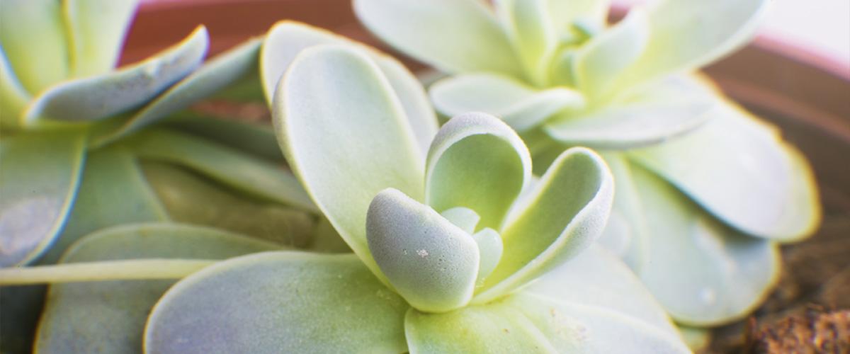 Succulents Class